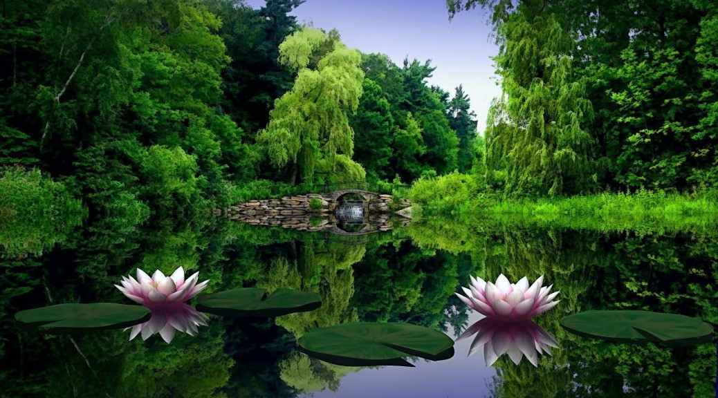 water_lilies_water_leaves_pond_bridge_trees_beauty_green_nature_30352_1920x1080